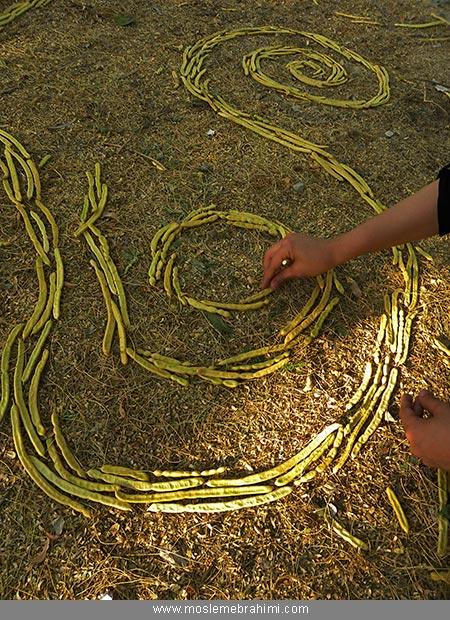 غلاف درخت کهور هنر محیطی طبیعت